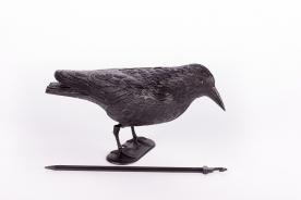 Galambriasztó varjú (14509)